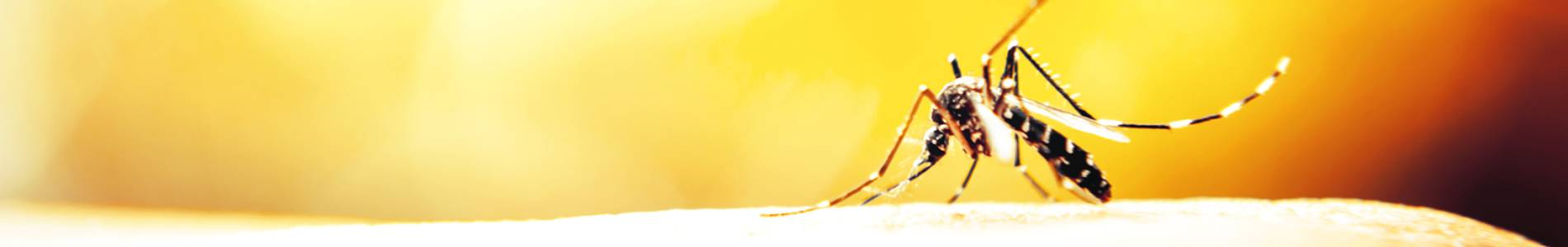 Pest Maintenance Home Page Banner